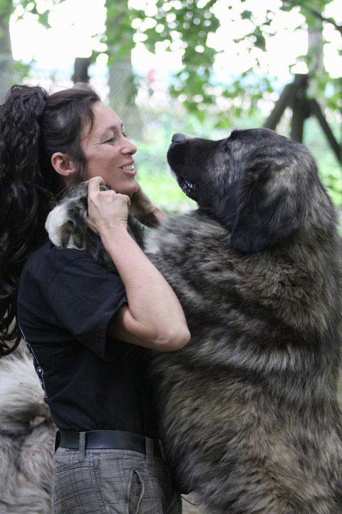 Kaukase mit Hundetrainer
